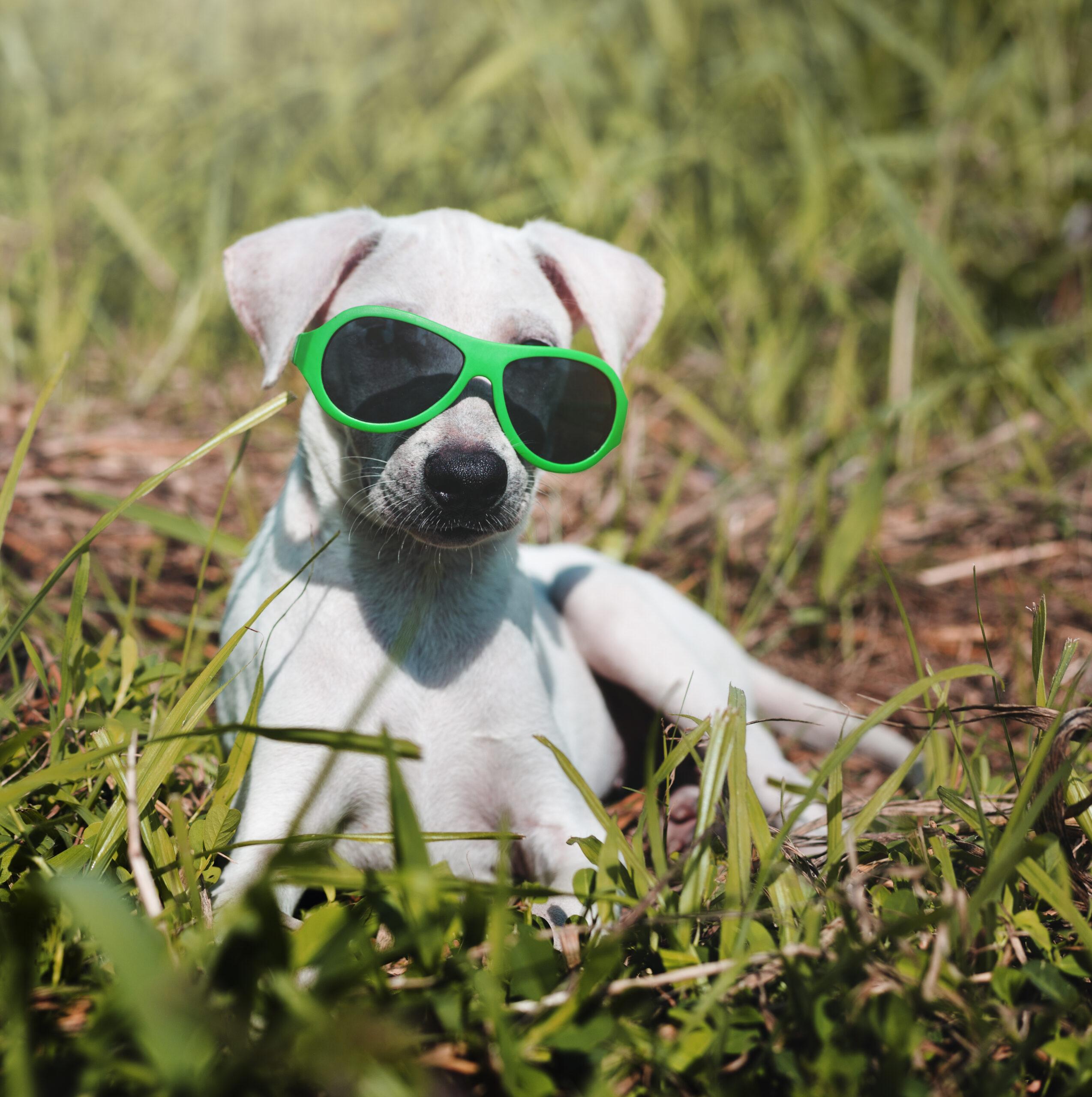 Consejos para que tu perro sobrelleve el calor