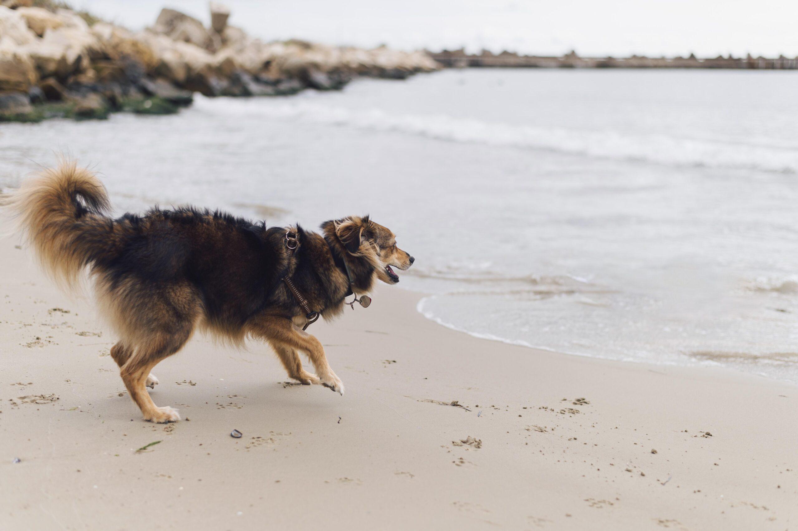 ¡Al agua perros!