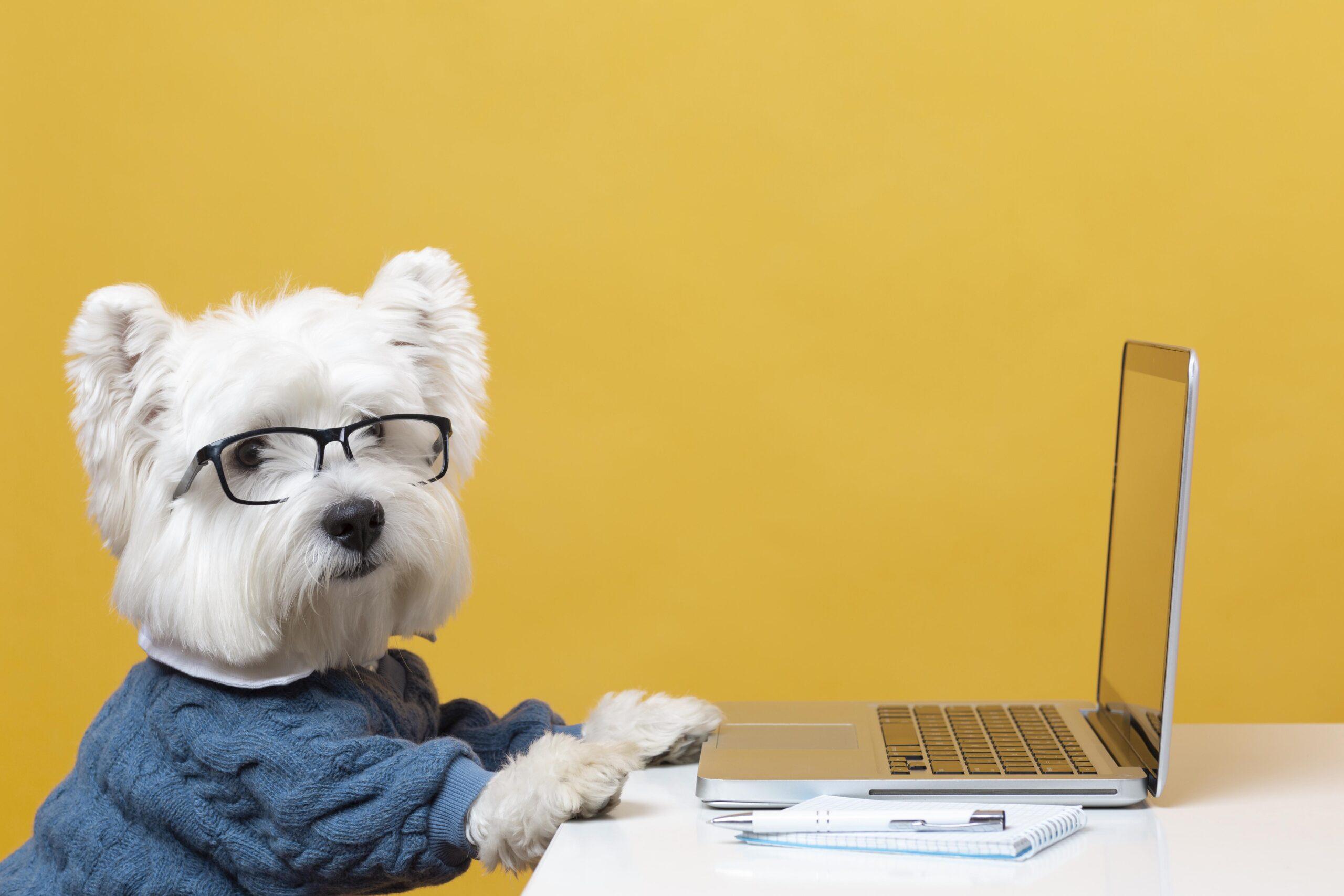 Cómo ayudar a tu perro a adaptarse a la vuelta a la oficina